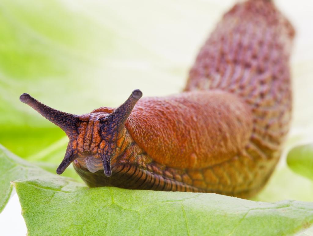 neudorff slug and snail control