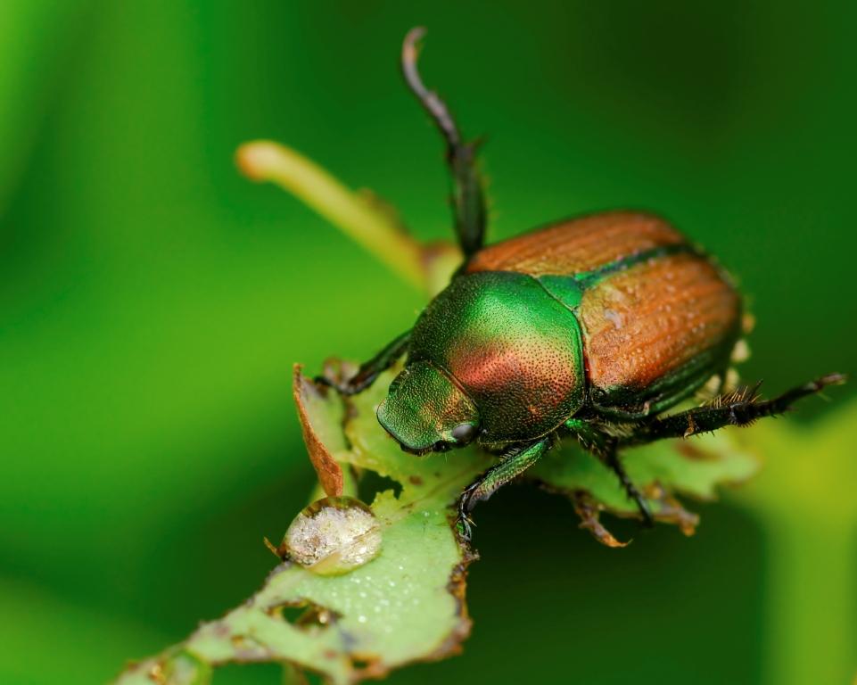 Neudorff Insect Control